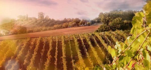 Private Wine and Cava Penedès Tour