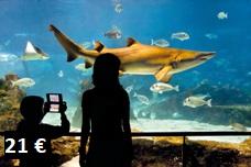 L'Aquàrium de Barcelona, the life under the Sea