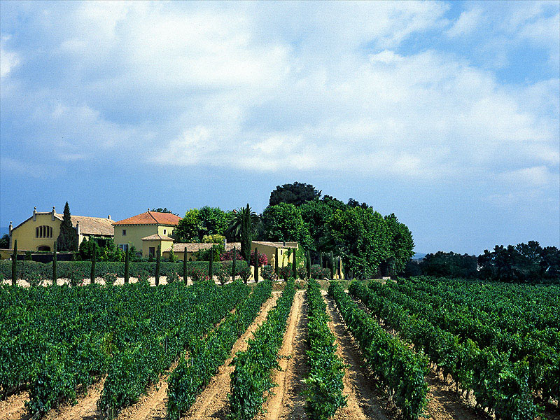 Mediterranean Lifestyle Wine Tour (with light lunch)